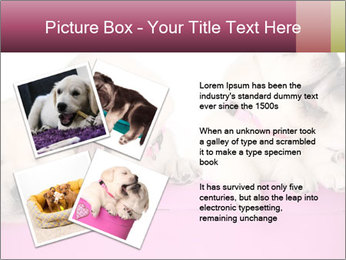 Labrador retriever puppies PowerPoint Templates - Slide 23