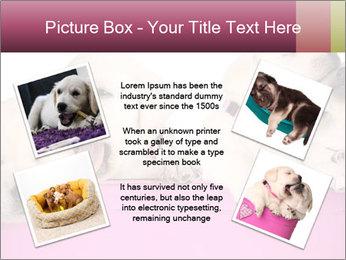 Labrador retriever puppies PowerPoint Templates - Slide 24