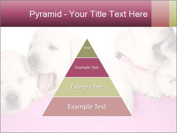 Labrador retriever puppies PowerPoint Template - Slide 30
