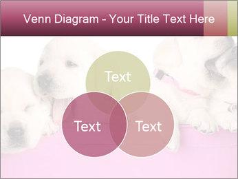 Labrador retriever puppies PowerPoint Templates - Slide 33