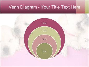 Labrador retriever puppies PowerPoint Templates - Slide 34