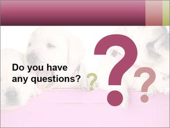 Labrador retriever puppies PowerPoint Templates - Slide 96