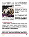 0000093028 Word Templates - Page 4