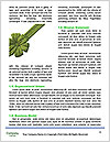 0000093035 Word Template - Page 4