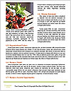 0000093041 Word Templates - Page 4