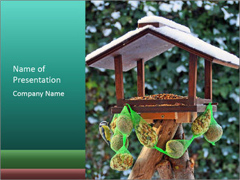 Bird feeder PowerPoint Template