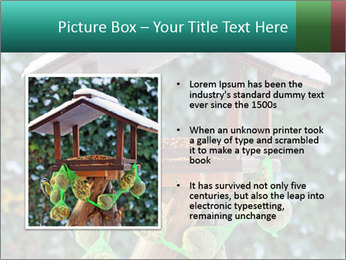 Bird feeder PowerPoint Templates - Slide 13