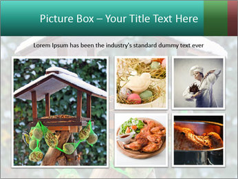 Bird feeder PowerPoint Templates - Slide 19