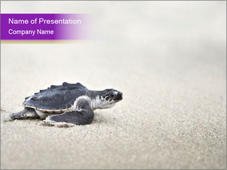 Sea turtle PowerPoint Templates