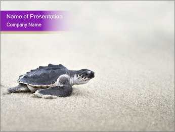Sea turtle PowerPoint Template - Slide 1