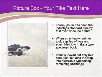 Sea turtle PowerPoint Template - Slide 13
