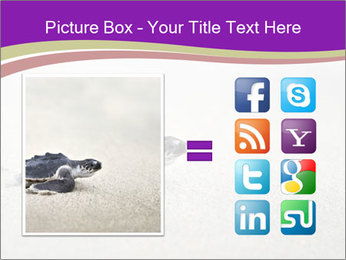 Sea turtle PowerPoint Template - Slide 21