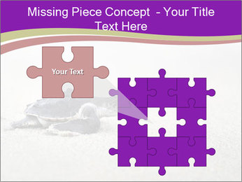 Sea turtle PowerPoint Template - Slide 45