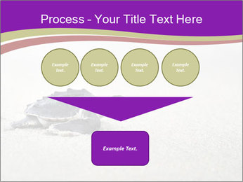 Sea turtle PowerPoint Template - Slide 93