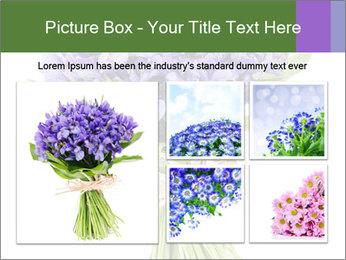 Flowers iris PowerPoint Template - Slide 19