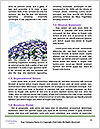 0000093095 Word Templates - Page 4