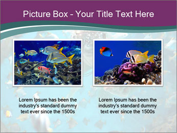 Brain coral PowerPoint Templates - Slide 18