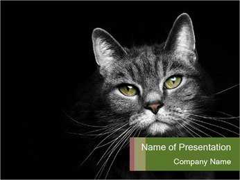 Grey cat PowerPoint Templates - Slide 1