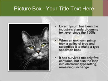 Grey cat PowerPoint Templates - Slide 13