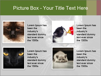 Grey cat PowerPoint Templates - Slide 14