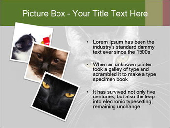 Grey cat PowerPoint Templates - Slide 17