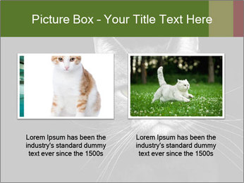 Grey cat PowerPoint Templates - Slide 18