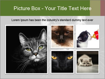 Grey cat PowerPoint Templates - Slide 19