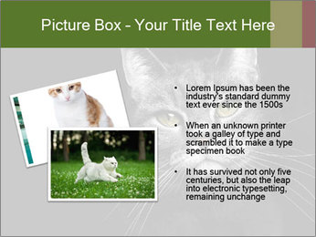 Grey cat PowerPoint Templates - Slide 20