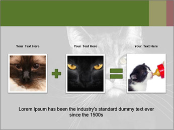 Grey cat PowerPoint Templates - Slide 22