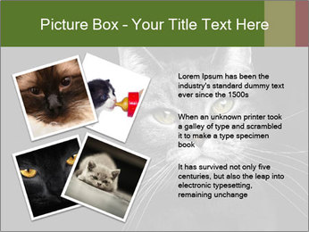 Grey cat PowerPoint Templates - Slide 23