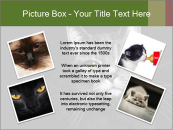 Grey cat PowerPoint Templates - Slide 24