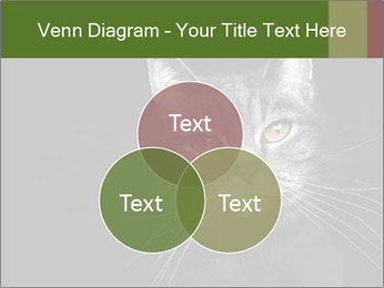 Grey cat PowerPoint Templates - Slide 33