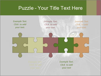 Grey cat PowerPoint Templates - Slide 41