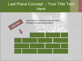 Grey cat PowerPoint Templates - Slide 46