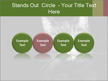 Grey cat PowerPoint Templates - Slide 76