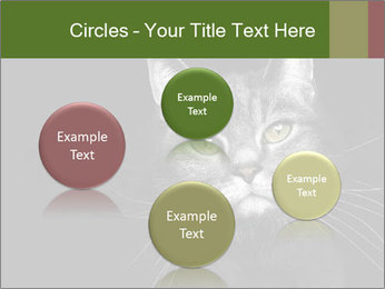Grey cat PowerPoint Templates - Slide 77