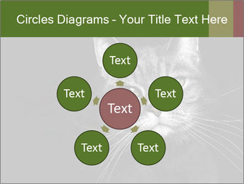 Grey cat PowerPoint Templates - Slide 78
