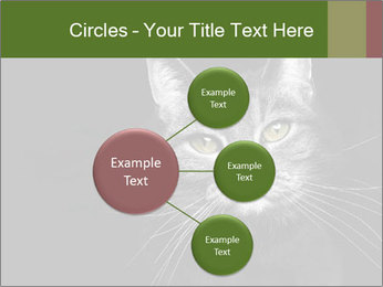 Grey cat PowerPoint Templates - Slide 79