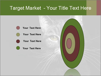 Grey cat PowerPoint Templates - Slide 84
