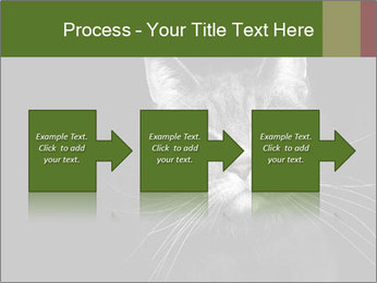 Grey cat PowerPoint Templates - Slide 88