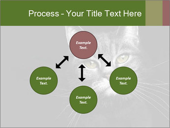 Grey cat PowerPoint Templates - Slide 91