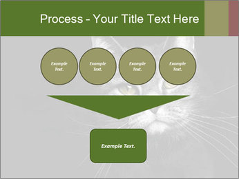 Grey cat PowerPoint Templates - Slide 93