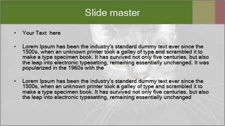 Grey cat PowerPoint Template - Slide 2