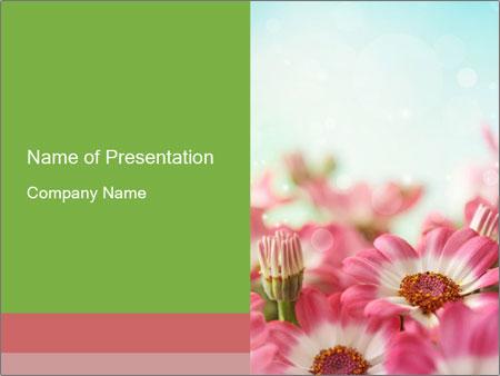 Summer daisy flower PowerPoint Templates
