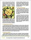 0000093201 Word Templates - Page 4