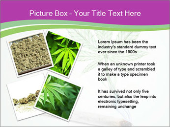 Marijuana PowerPoint Template - Slide 23