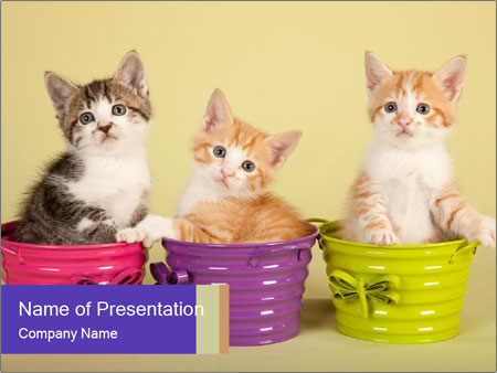 Moggie kittens PowerPoint Template
