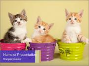Moggie kittens PowerPoint Templates