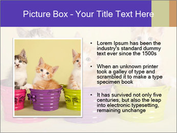Moggie kittens PowerPoint Template - Slide 13