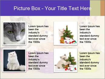 Moggie kittens PowerPoint Template - Slide 14